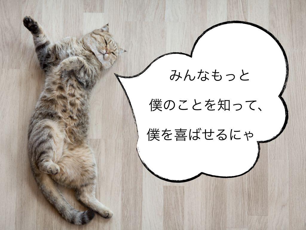 猫とハッピーに暮らすための10個のルール