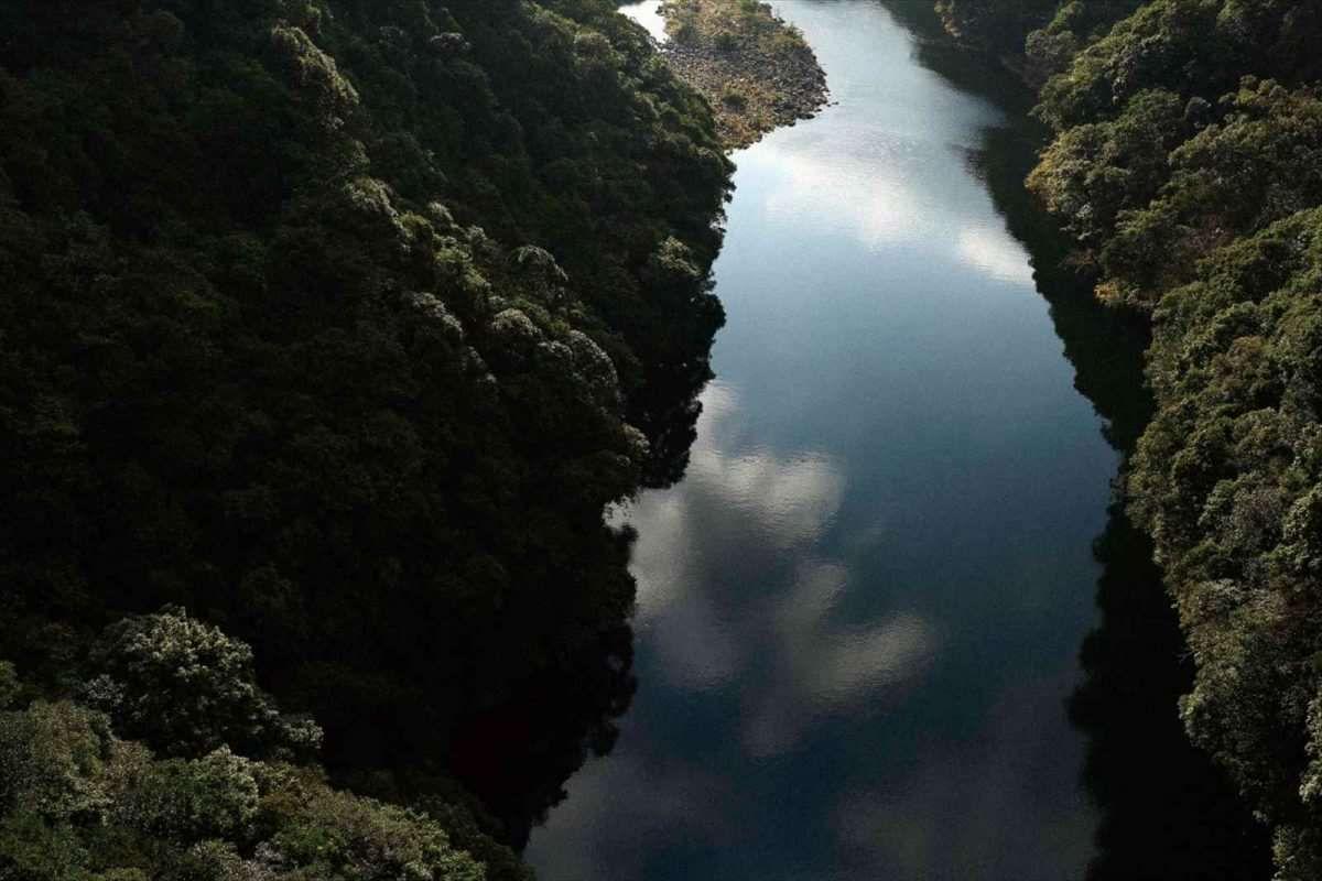 【HAGS】香が濃く・雨にも強い「屋久島地杉」を家づくりに取り入れる~屋久島地杉プロジェクトから~