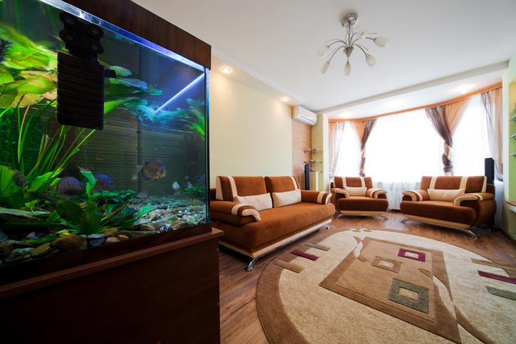 熱帯魚の水槽はどのように配置するのが美しい?