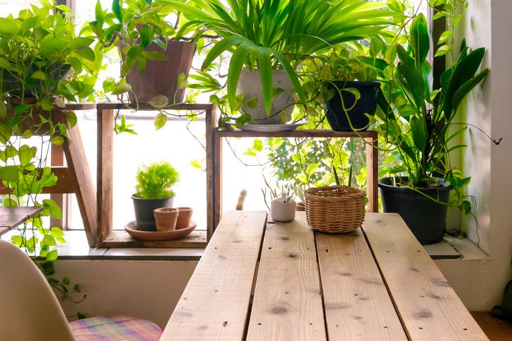 心と身体に健康を。育てやすい観葉植物選びのポイント