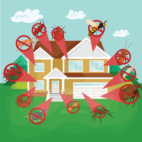 虫が増える夏までに。マンションの害虫駆除対策を始めよう