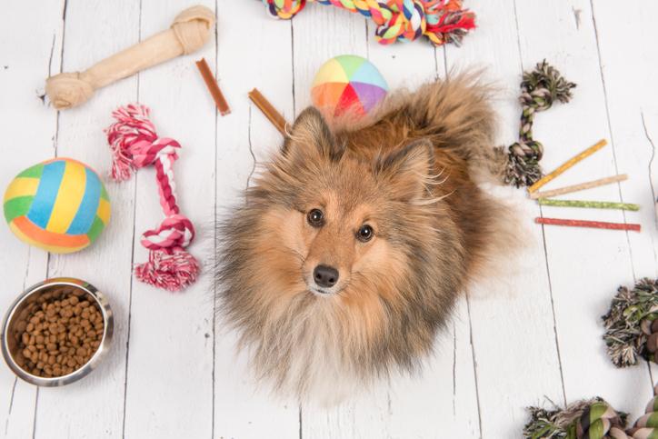 愛犬の健康を考えて。ごはん台を取り入れてみませんか?