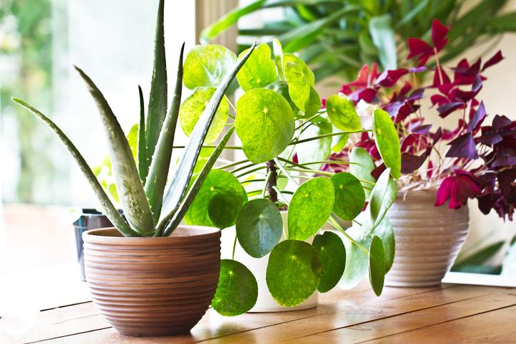 グリーンを取り入れよう!インテリアに合う観葉植物、おすすめ6選!