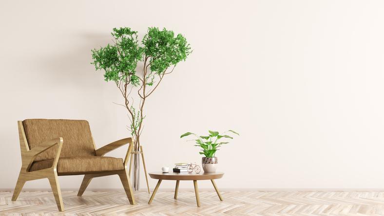 癒しの空間を作る!室内観葉植物の選び方3つのポイント 画像