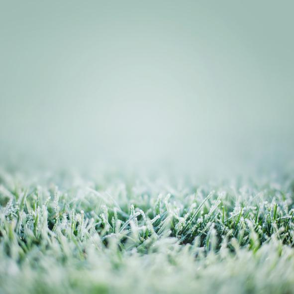 今日の季節 12/31〜1/4 雪下麦を出だす(せっかむぎをいだす)