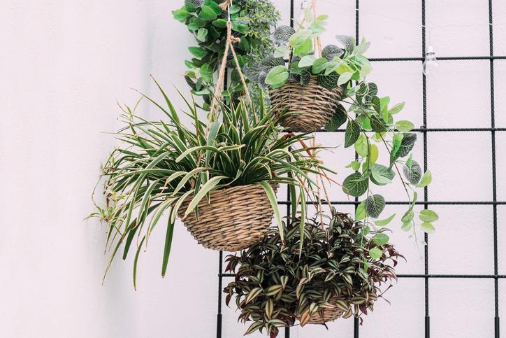 観葉植物で緑がある暮らしに。日当たりが少なくてもOKな植物3選