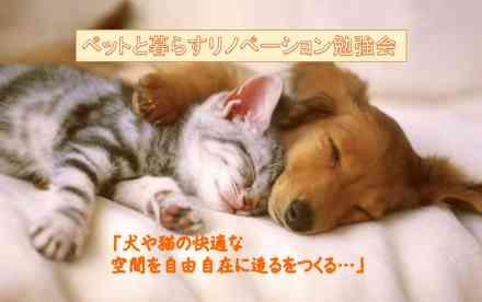 ペットと暮らす家づくりとリノベーション「愛犬・愛猫ちゃんの行動パターンを知って快適な空間をつくる…」